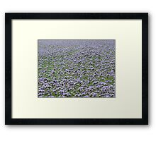 Blue field forever Framed Print