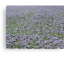 Blue field forever Canvas Print