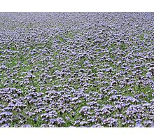 Blue field forever Photographic Print