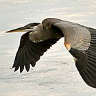 Flight of the Blue Heron by Monte Morton
