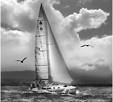Bird Watch Sail Photographic Print