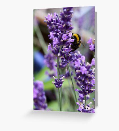 Summer Bumble Bee 3 Greeting Card