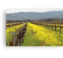 Napa Valley Grape Vineyard  Canvas Print