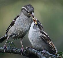 Mama Bird by TickerGirl