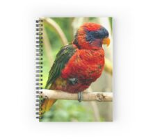 Rainbow Colored Lorikeet Bird posting in a Tree Spiral Notebook