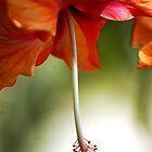 Hanging Hibiskus by loiteke