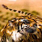 Tiger, Tiger, Burning Bright by Jessica Dzupina