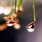 Raindrop by Kym Howard
