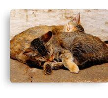 Twin Kittens Canvas Print