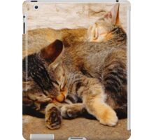 Twin Kittens iPad Case/Skin