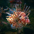 """""""A Lion Fish That Glows"""" by franticflagwave"""