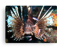 Caribbean Lion Fish guarding the Coral Reef Canvas Print