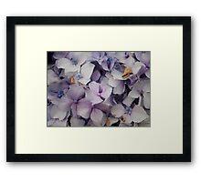 Hydrangeas in tiles  Framed Print