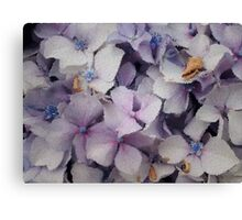 Hydrangeas in tiles  Canvas Print