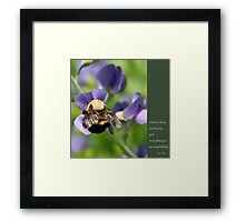 Bumble Bee on Baptista: Lao Tzu quote Framed Print