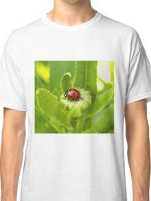 Macro Ladybug on Garden Plant Classic T-Shirt