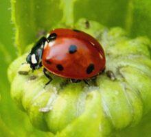 Macro Ladybug on Garden Plant Sticker
