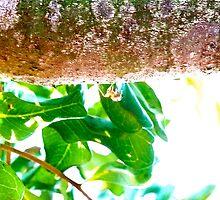 Spider On Tree Branch by CissieMayHaines