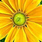 Yellow daisy by Shulie1