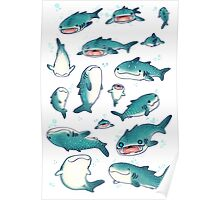 whale sharks! Poster
