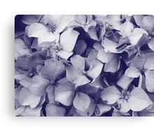 Hydrangeas in crayon  Canvas Print