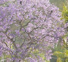 Three Crows Atop A Jacaranda Tree by CissieMayHaines