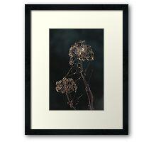 Wild flora XII 0161 Framed Print