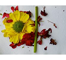 Art from Fading Flowers - UPDATE Photographic Print