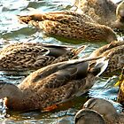 Quack! by fireplug