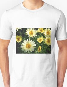 Daisy Flower Patch waking to the Morning Sunlight  T-Shirt