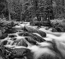 Black and White Roosevelt National Forest Stream Portrait by Bo Insogna