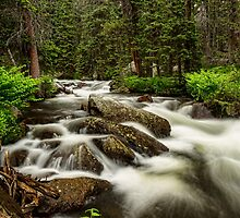 Roosevelt National Forest Stream Portrait by Bo Insogna