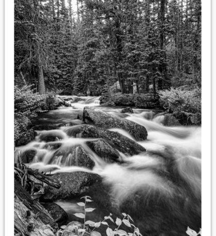 Black and White Roosevelt National Forest Stream Portrait Sticker