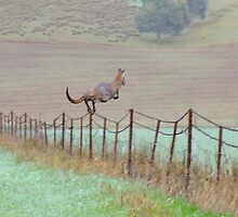 Super Roo! by Enivea