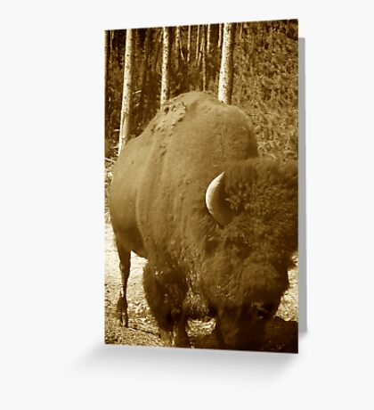 Bison Strolling Greeting Card