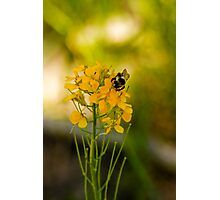 Bees and Bokeh Photographic Print