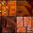 Leaf Collage by Stacy Colean