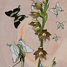 Butterflies & Orchids 3 by Leonie Mac Lean