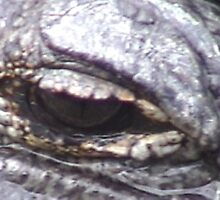 Gator eye by BillH