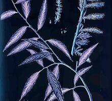 A curious herbal Elisabeth Blackwell John Norse Samuel Harding 1739 0194 The Willow Tree Inverted by wetdryvac
