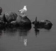 Seagull Island by Kofoed