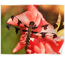 Dragonfly on the Pink Poster