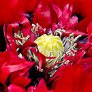 Red Poppy Heart by Vicki Field