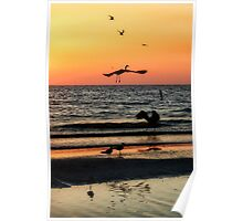 Birds at Sunset, Indian Shores Poster