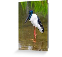 Stand Tall - Jabiru in Port Douglas Greeting Card