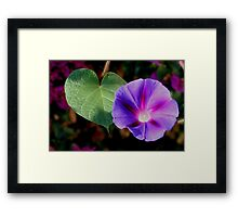 Beautiful Single Morning Glory Flower and Leaf Framed Print