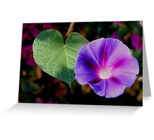 Beautiful Single Morning Glory Flower and Leaf Greeting Card