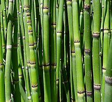 Bamboo by Atanas Bozhikov Nasko