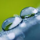 Gathering Waterdrops (win your favorite photo... go to my homepage!) by Lars Basinski