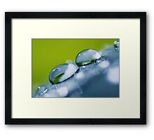 Gathering Waterdrops (win your favorite photo... go to my homepage!) Framed Print